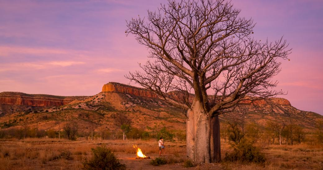 Boab tree with Cockburn Ranges in the background. Image: CJ Maddock